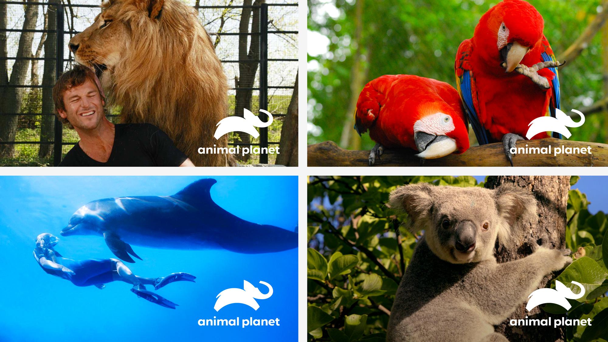 Animal Planet rebranding 2018 - wizualizacje logo